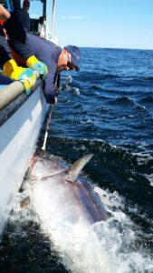 tuna-fishing-2014-144_orig