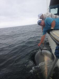 tuna-fishing-2014-70_orig